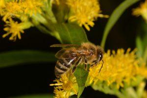 Eine Biene auf einer Blume