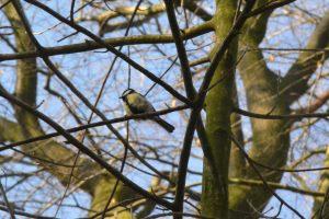 Ein Vogel auf einem Baum