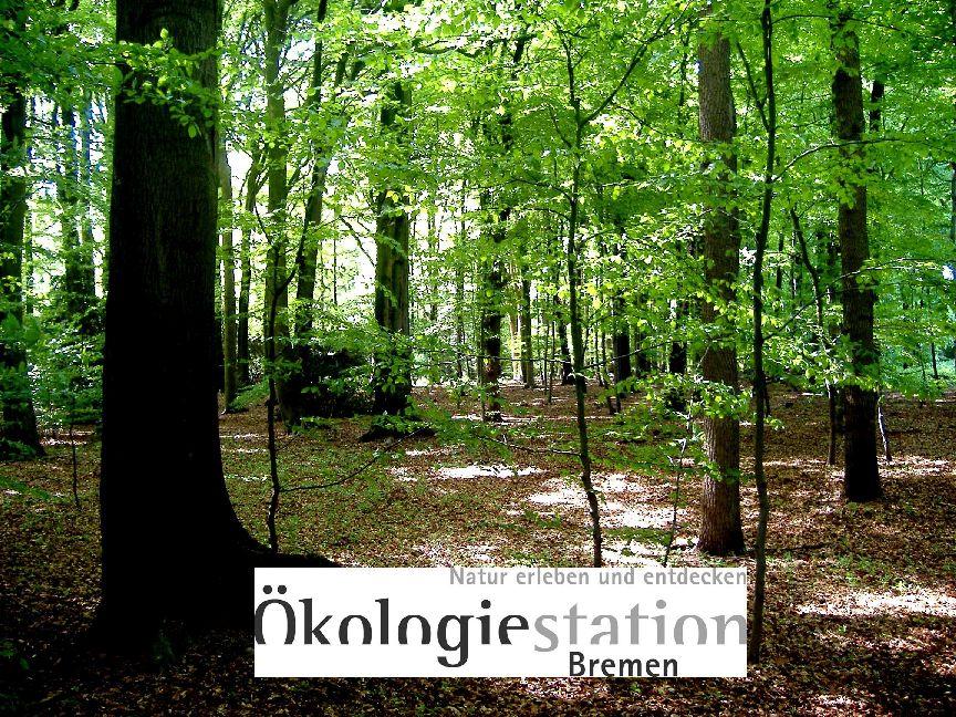 """Ein Laubwald und Schriftzug """"Natur erleben und entdecken. Ökologiestation Bremen"""" vor weißem Hintergrund."""