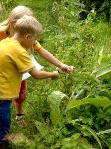 Kinder pflücken Kräuter