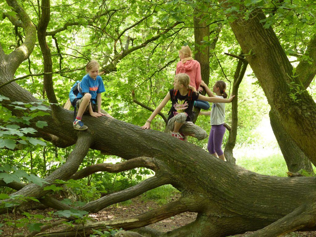 Kinder klettern auf einem Baum