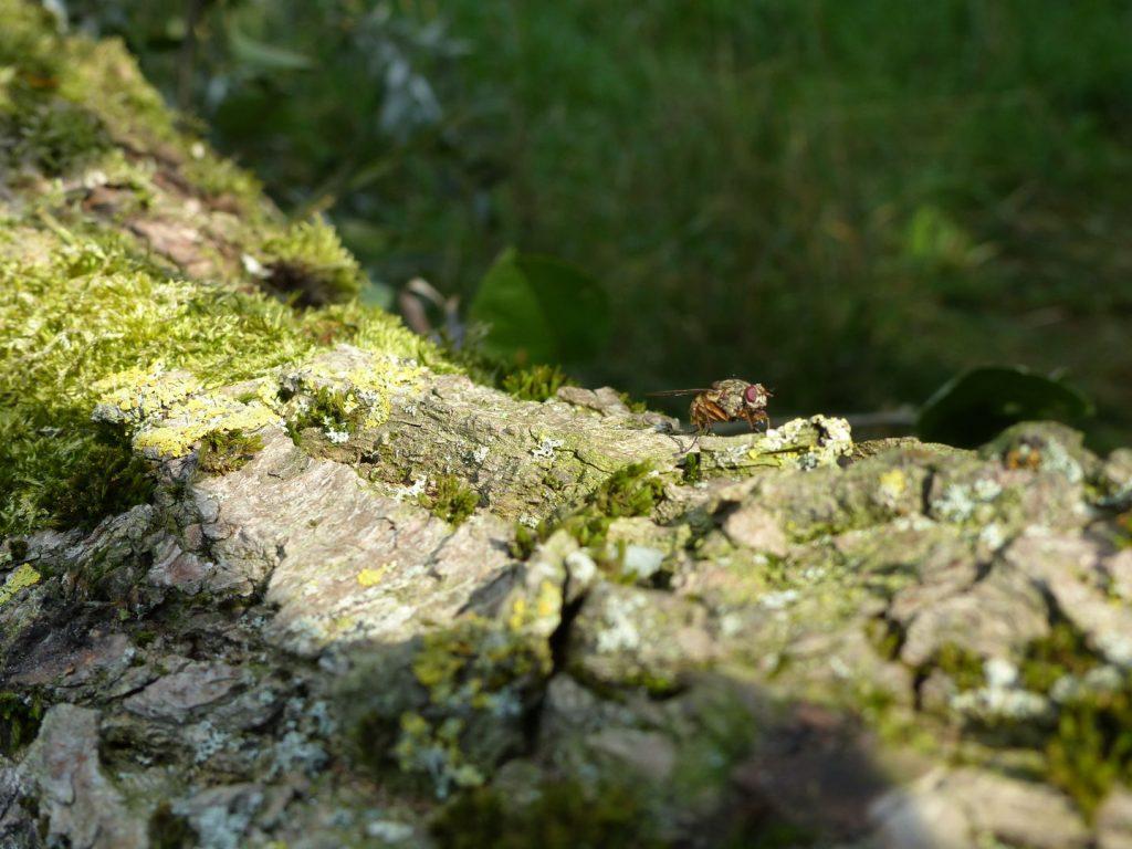 Eine Fliege in der Natur