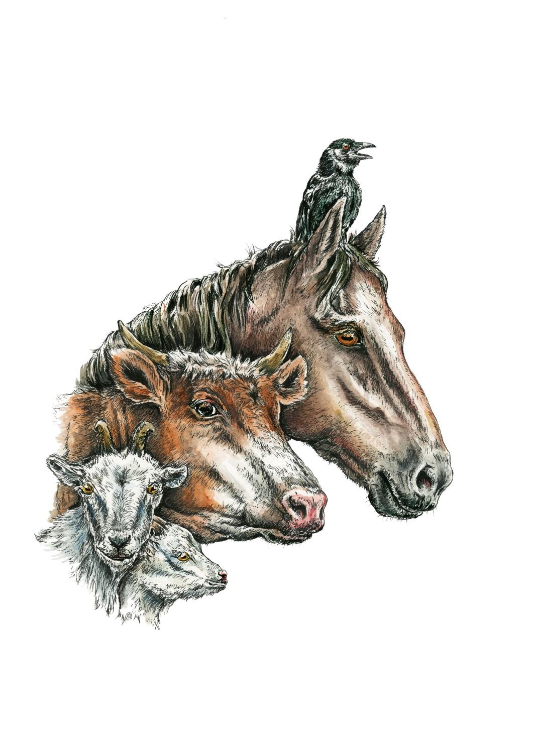 Zeichnung: Köpfe von 2 Ziegen, einer Kuh, einem Pferd und ein Rabe auf dem Kopf des Pferdes